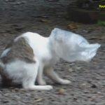 https://t.co/FDLofxSFw8 비닐봉투가 머리에 달라붙어 어쩔줄 몰라하는 고양이를 도와주는 개의 등장씬이 너무 멋진 건에 대하여 https://t.co/8QH6DHFbkf