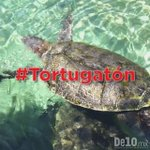 🐢😍🐢😍🐢 Cada tuit con el HT #Tortugatón aporta $1MXN para la conservación de las tortugas marinas ¡Súmate con @XcaretPark y @XelHaPark! https://t.co/T8zbCgCBQP