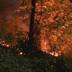 A closer look at the brush fire on Skinner Butte earlier this evening. More @KEZI9 News at 11. #theoneone https://t.co/x4kxvNwo37