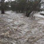 North Para River at Nuriootpa flowing fast after heavy rains. #AdelaideStorm #Barossa https://t.co/IgU1L0IDIM