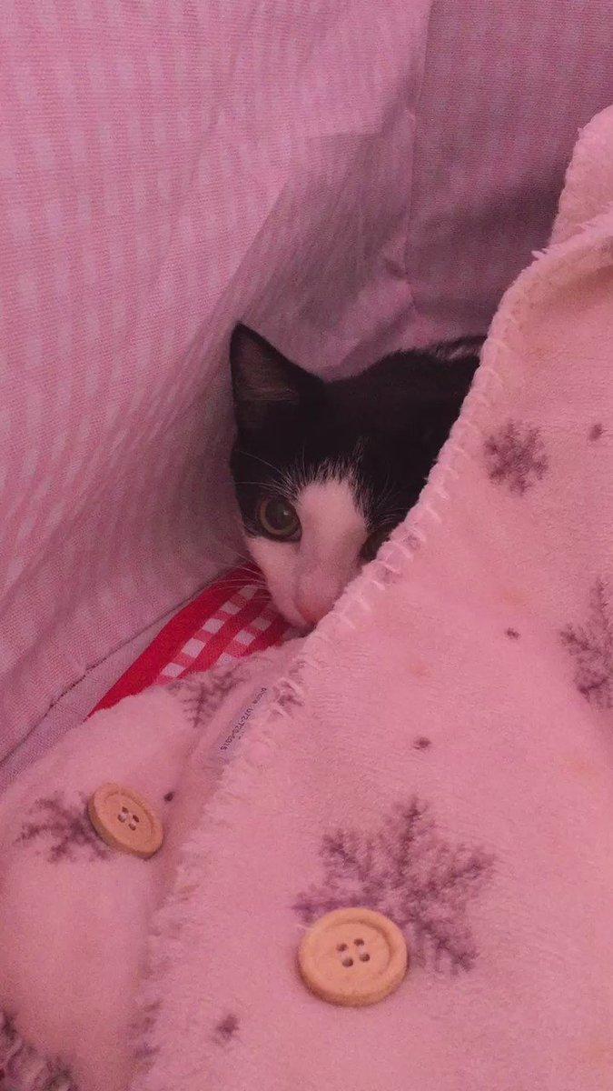 昨日やってきた新入り子猫のきゅうちゃんです。昨日は食べなかったカリカリ、夜中に完食していて、朝あげた30グラムも完食しました(見てない間に) https://t.co/rUDaKoLf9R