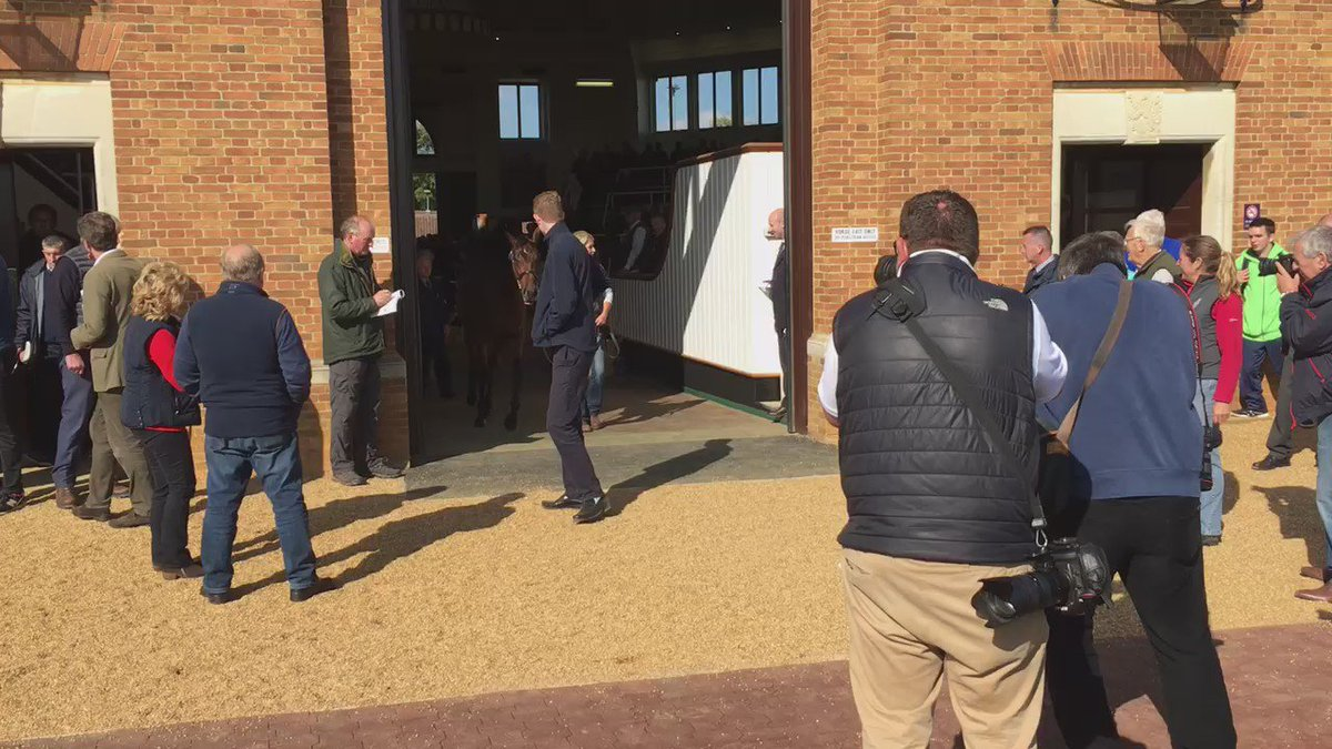 Here he is...the £2.6m Dubawi Colt out of Fallen For You