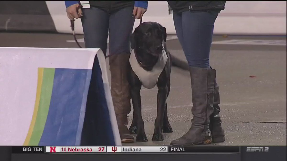 Boise St is using a tee retrieving dog and it's a very good dog https://t.co/nqPDPvHtmC