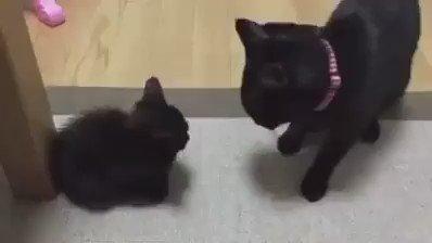 섬세하고 우아하게 혼내는 엄마 고양이 https://t.co/Anqkr5x9sp