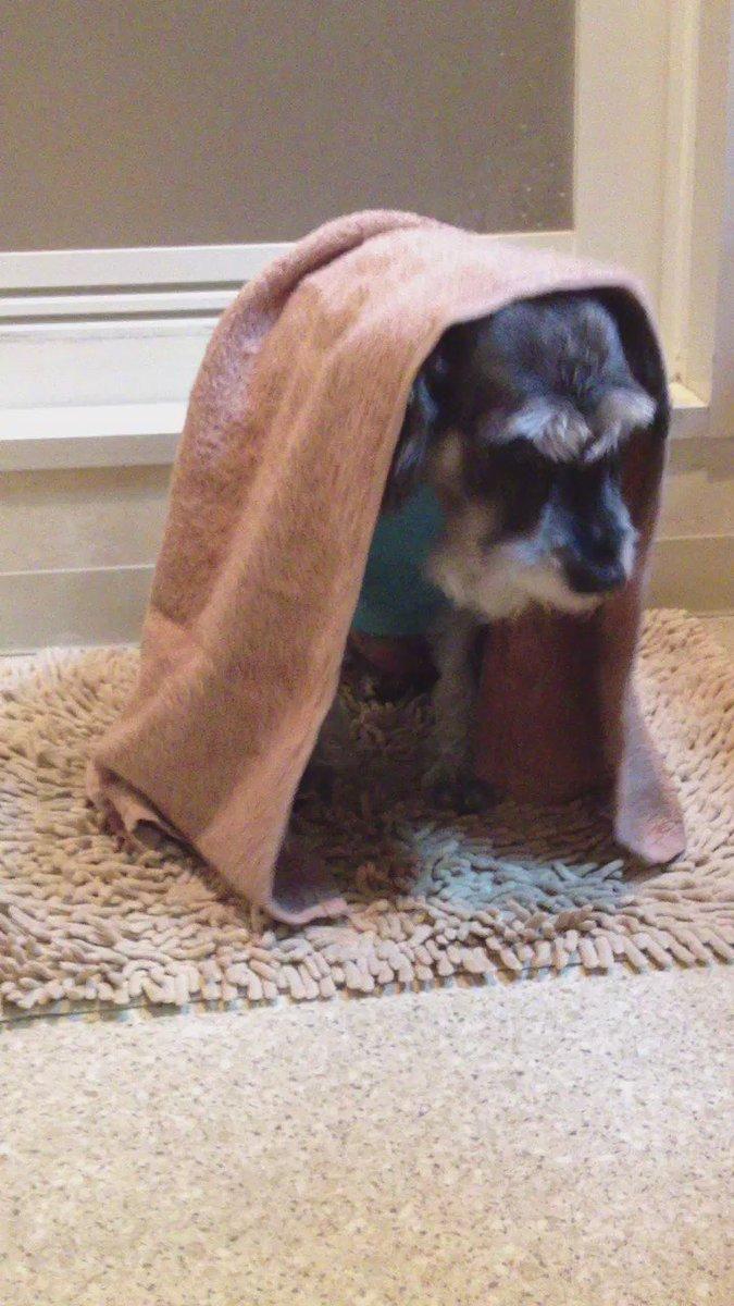 エヴァさんの思い出🐾2012.5カミナリが怖くて怖くて💦いつも脱衣所で震えていたっけ。#秘密結社老犬倶楽部天国支部 #カ