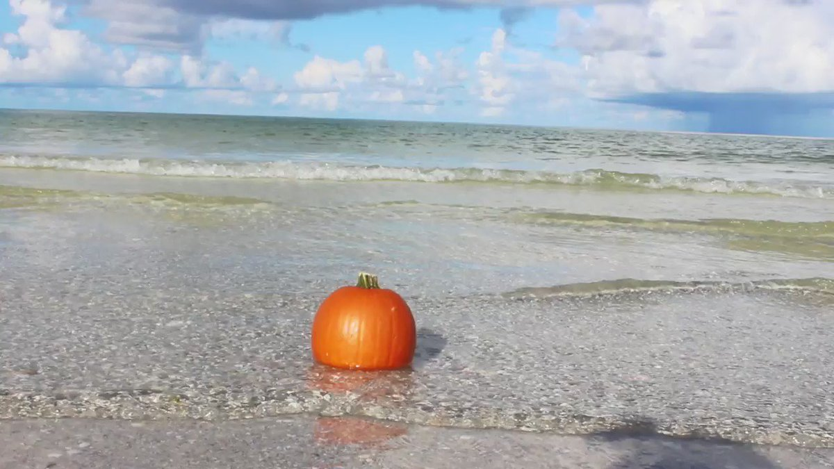 No trick, all treat. Happy Halloween from Florida. #LoveFL https://t.co/zy6T2IaYBe