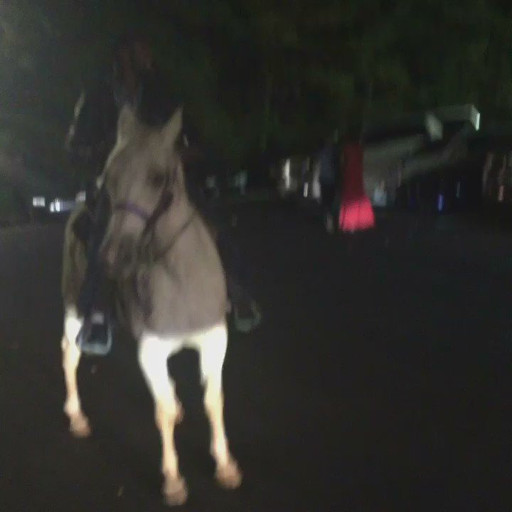U may have been to Follies. U may have seen a horse. Have you ever been to follies and seen a dude valet a horse? https://t.co/qlkHXpV4Ie