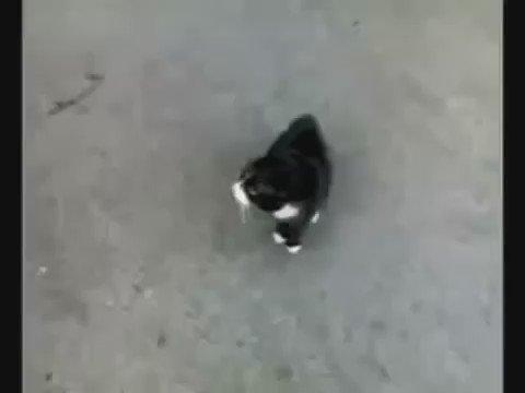http://pbs.twimg.com/ext_tw_video_thumb/818800537382449154/pu/img/Bmj1jXvoe7Ufk1CF.jpg