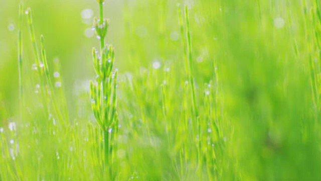 5「Little Wish〜lyrical step〜」田村ゆかり【part2】#Little_Wish_lyrical