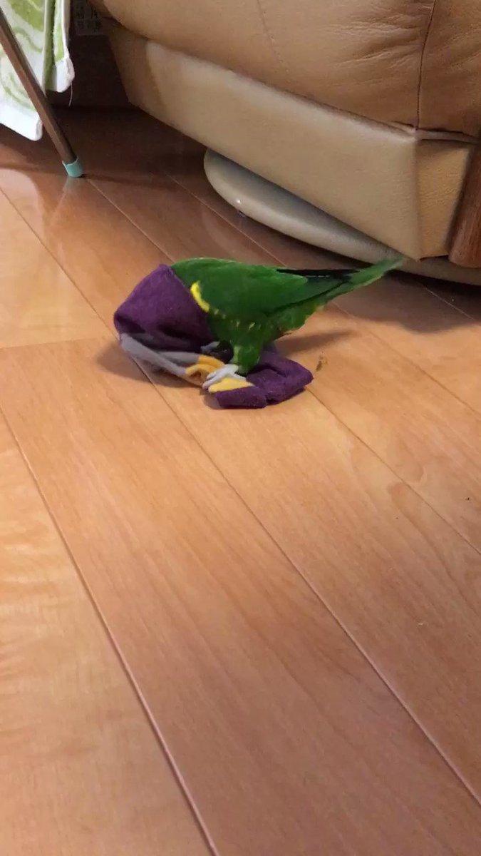 靴下オバケ出てた。 https://t.co/iXasMlwfTp
