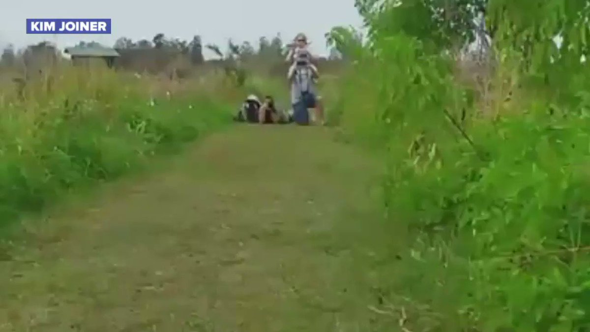 Massive alligator caught on video walking through nature reserve in southwestern Florida https://t.co/8P3FruClHT