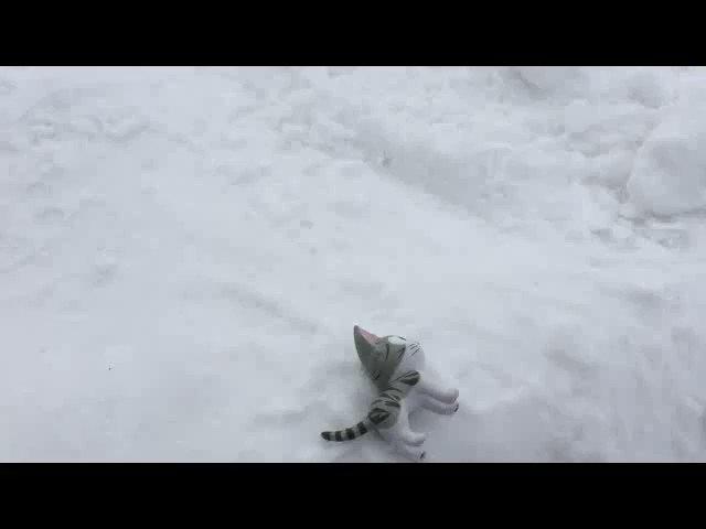 チョーシになんてのってないれすよ〜 みゃ〜! タントーやめて〜!#こねこのチー #雪まつり #北海道 #札幌 #タントー