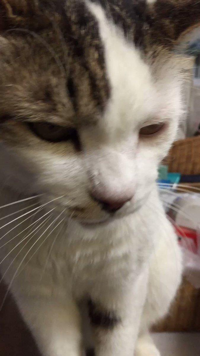 ネコが行方不明に。2日目。さいたま市北区宮原町、吉祥院の裏あたり。ビワコ・12歳・オス・去勢済。特徴は太めの手足に太めの