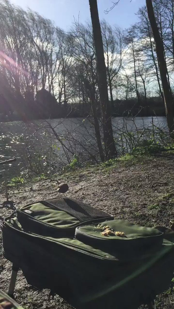 While Waiting For A Bite @carpology #CarpFishing #FeedingTheBirds #CarpLife https://t.co/bAQlc6gDJm