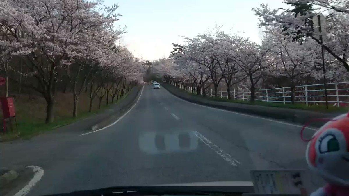 運転荒すぎ⚡ 桜並木街道???? https://t.co/rTXO1UVyQD