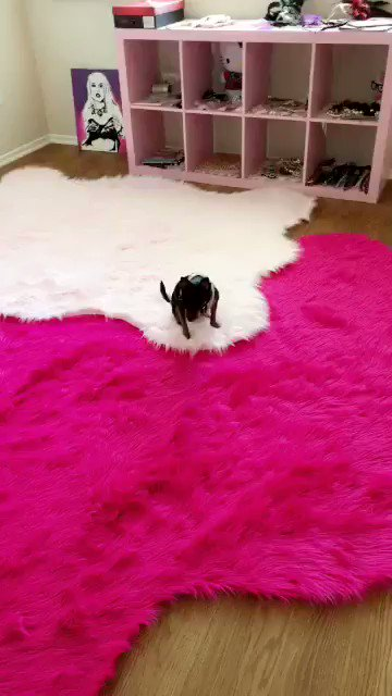 Loving my 2 new pink rugs for my cam room fuzzy wuzzy https://t.co/yBluVl4bYV