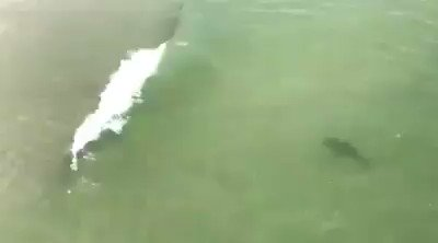 Several sharks were spotted swimming close to the shore at Myrtle Beach