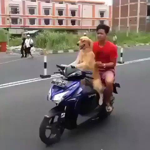 -¿Cariño vienes a casa?+No puedo, estoy paseando al perro. -Estoy sola. +