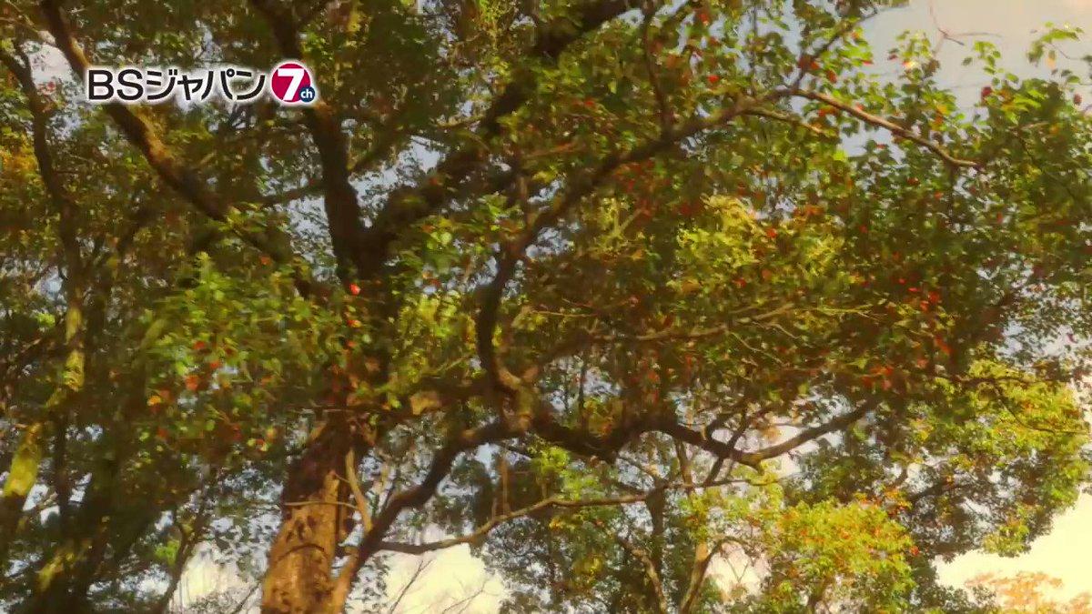 本日6/23(金)23:30からBSジャパンにて放送される『ワカコ酒 Season3』 第12夜「特別な旨さ、和牛たたき