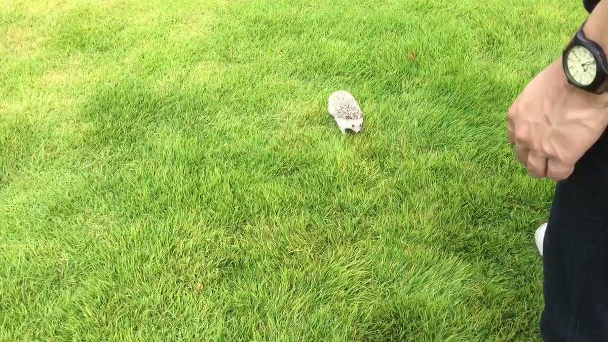 朝、公園にお散歩に行きました。外でこんなに素早く動く松太郎を初めて見た…!芝生、気持ちよかったのかな?(^◯^)