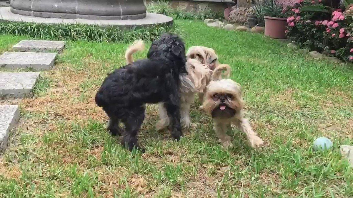#EsteViernesTeDigoQue #NomasPeleasdePerros #dogsoftwitter #peleasdePerros https://t.co/vDLk6pn9Az