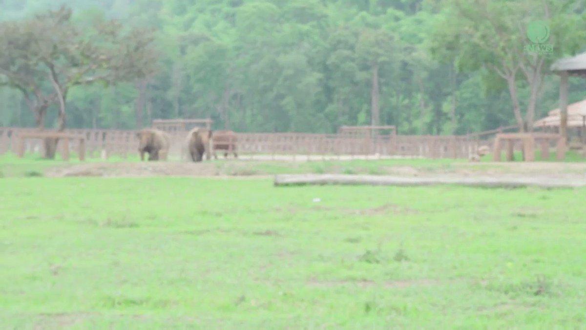 RT @yashar: Sound On: Elephants rushing to greet a new orphan at an elephant sanctuary. https://t.co/vw0SMXNK9n