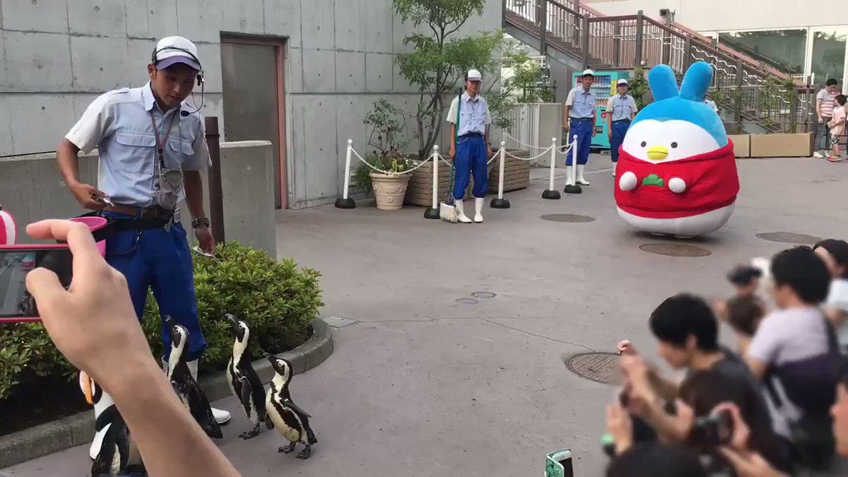 【おそ松さん×空想水族館inシーパラ】次こそはとの意気込みでペンギンパレードに挑戦したうさペン、植え込みに引っかかり無念