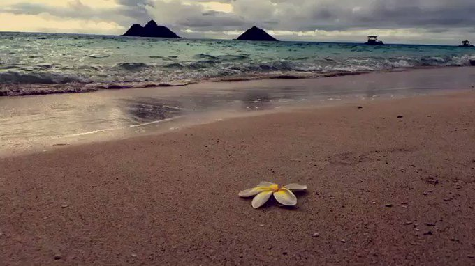 Missing Hawaii & all its beauty https://t.co/AageDKI1tH