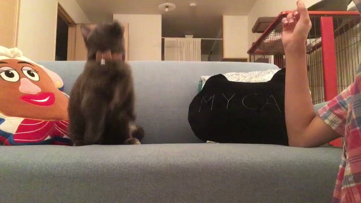 雷が怖くてもちゅーるは食べられる。#猫アイドル #ニャル子 #マンチカン #猫好きさんとつながりたい  #チャオちゅ〜る