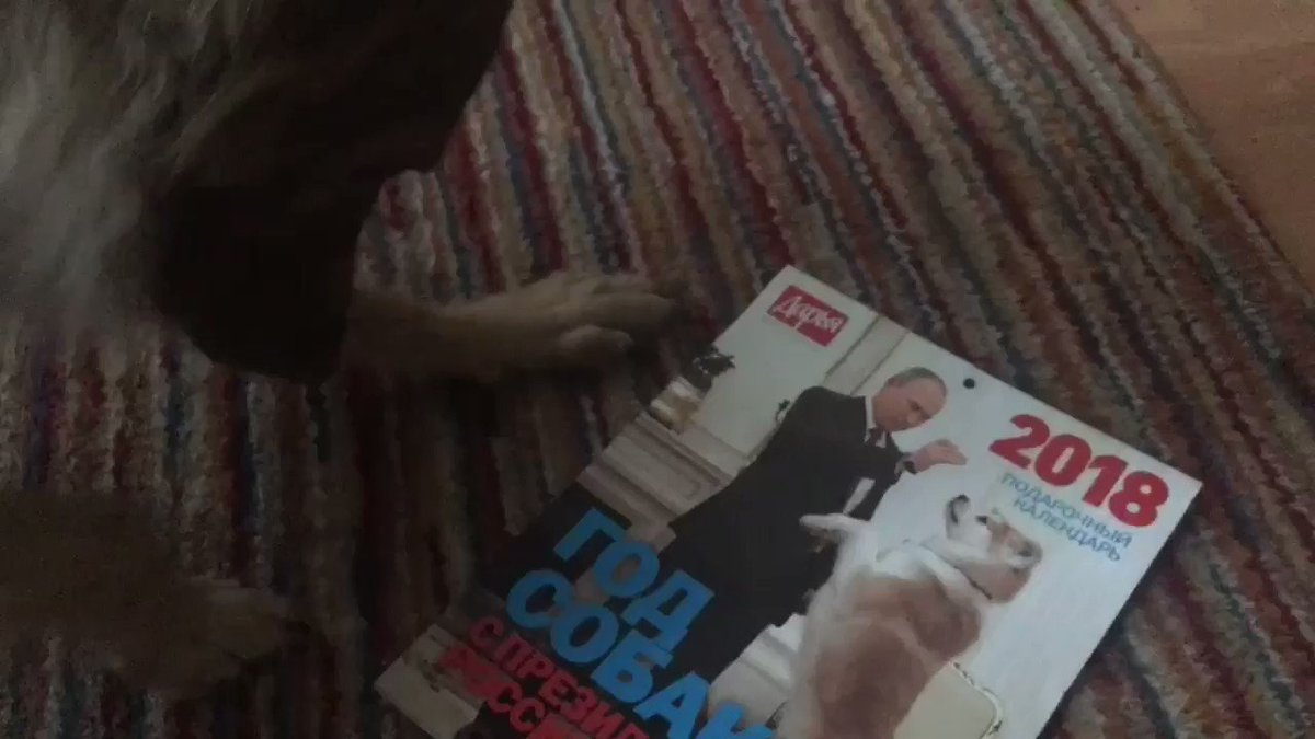 My pooch reviews the new Putin 'Year of the Dog' calendar. https://t.co/gaDSMFtG4B