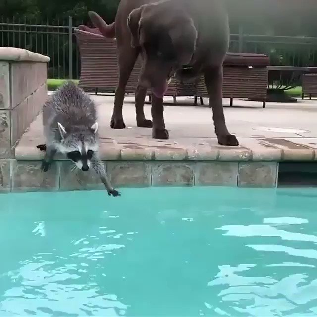 RT @_CaitlynNicole_: take a little time out of your day to watch this 🐾 https://t.co/ugIzrzqHTk