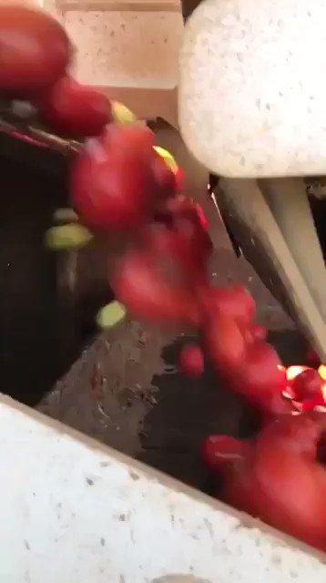 آلة مدهشة لفرز الطماطم تسمح فقط بمرور الأحمر الناضج. https://t.co/LAXFuxaPvu