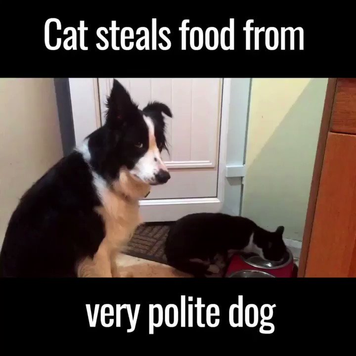 I can't stop laughing ..their eyes say it ALL! 🐶😻😂 https://t.co/JaeFZagXDu