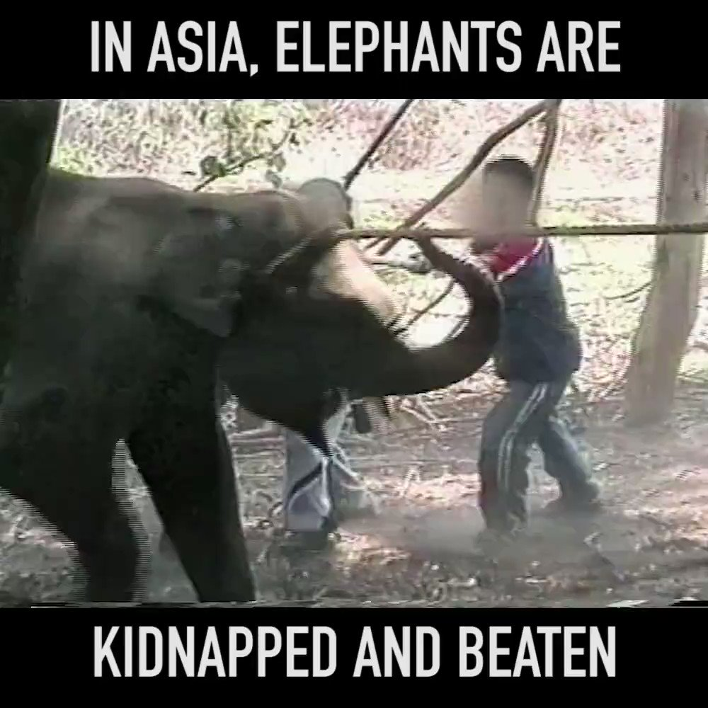 RT @peta2: What you need to see before you (hopefully NEVER) ride an elephant. https://t.co/rw2Fk3JAFE