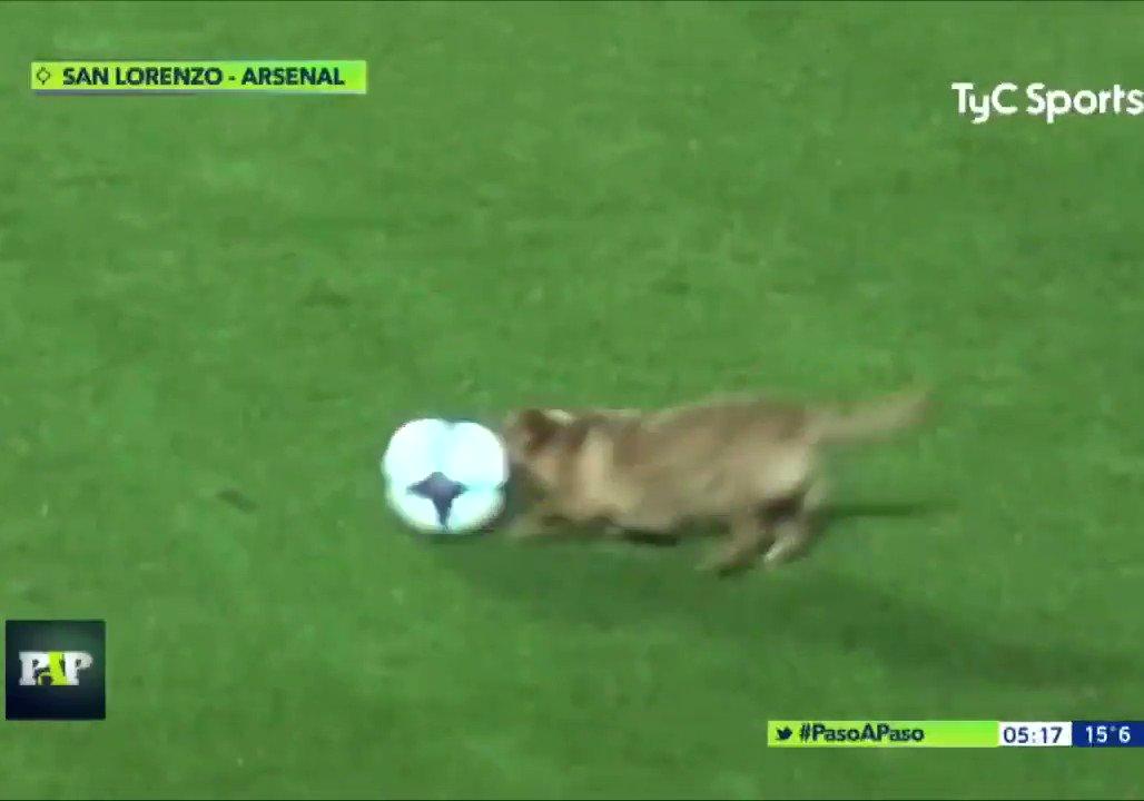 アーセナルの試合に乱入した犬にインタビューを試みる海外マスコミに笑ったwwwww