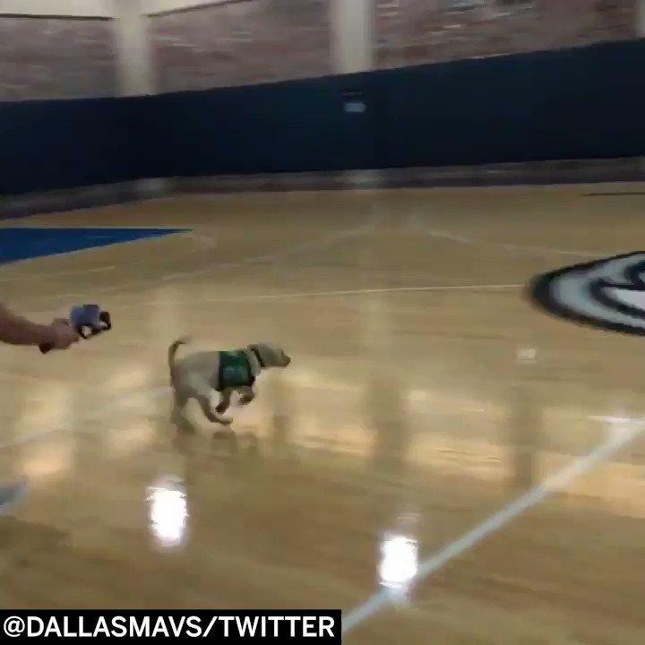 �� @swish41 meets SWISH the puppy��   (via @dallasmavs) https://t.co/qPBgYOkN2L