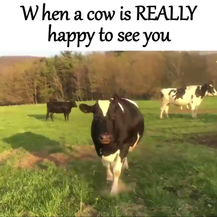 My MOOOOOOD!  It's a long #CanadianThanksgiving weekend here!  #grateful love & blessings   📹 by Farm Sanctuary https://t.co/HCbVRV23uQ