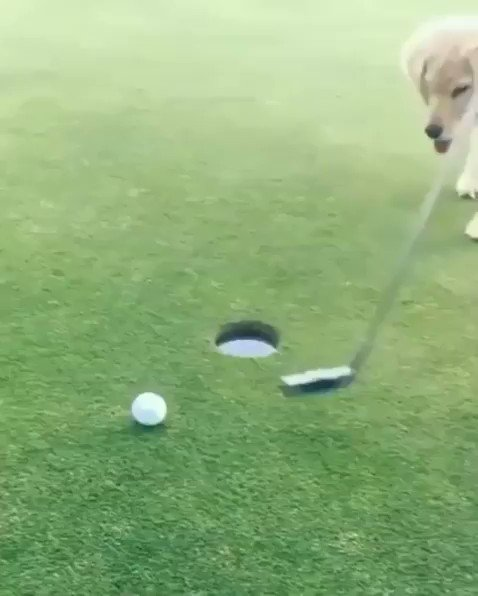 We wouldn't have awesome moments like this #IfItWerentForDogs   ��️: Do You Believe in Maverick/IG https://t.co/aNZ4uqXDxw