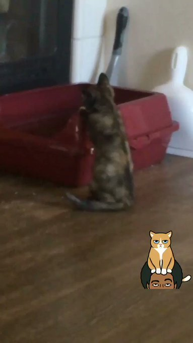 Riley chasing her own tail because she's a strong independent cat who doesn't need no toys. #potatoquality https://t.co/GLFftnfqIX