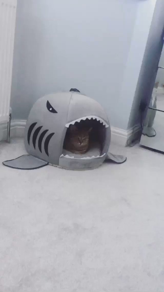 Shark bait OOH HA HA https://t.co/3XZLTTjaoU