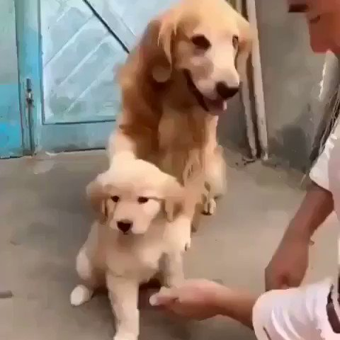I watched video and I think my heart exploded. Enjoy! cc: @mcdonaldcomedy https://t.co/8de96GxZAo