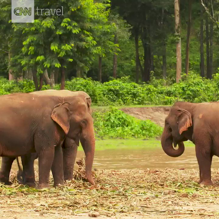 This sanctuary in Chiang Mai, Thailand, rescues and rehabilitates elephants https://t.co/x5tlt6rl2E https://t.co/Ioz5zOqMV2
