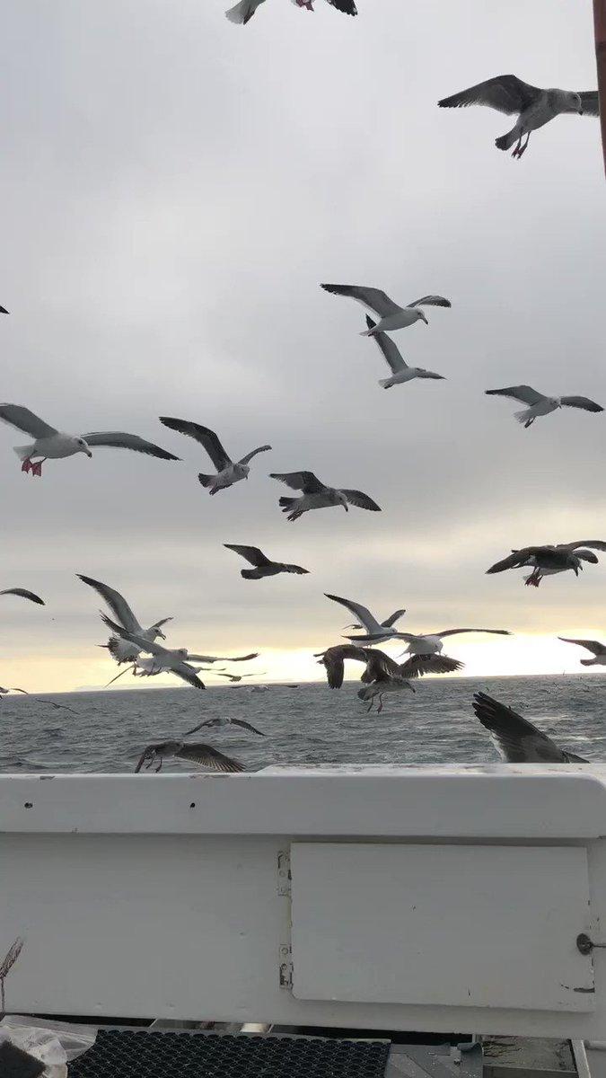 Spent the day on the ocean, caught plenty of fish. #LifeIsGood https://t.co/LI8M6rMVLf
