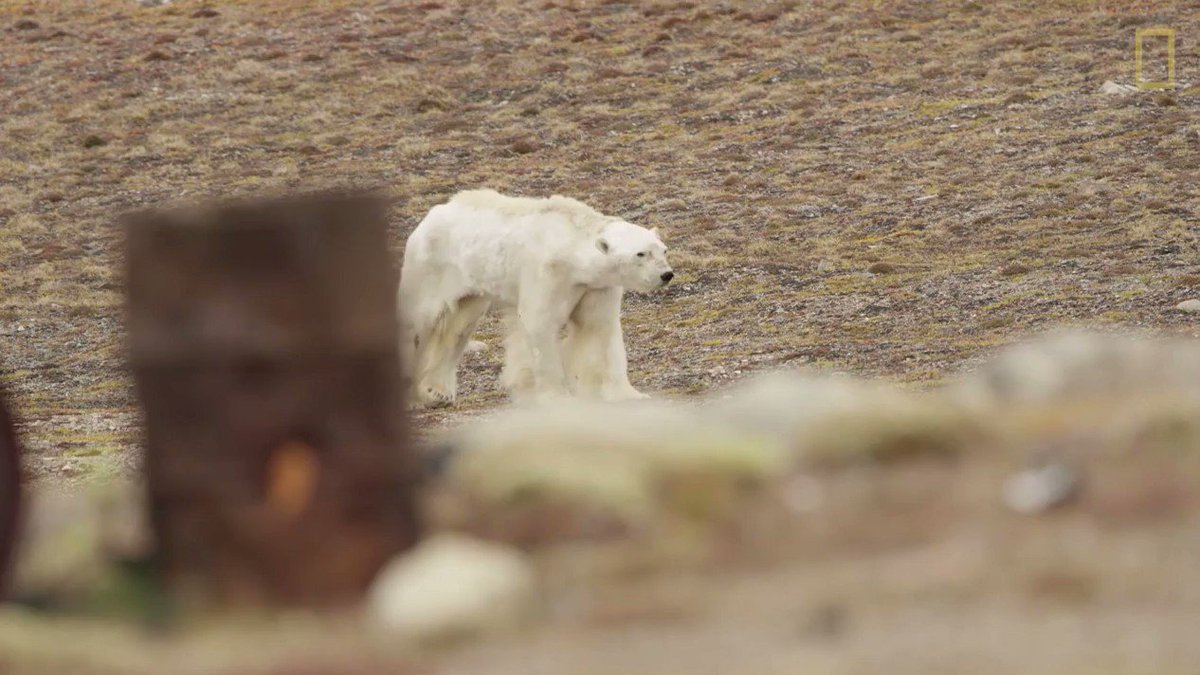 If you were moved by this polar bear video ⬇️   Take action here ➡️ https://t.co/v9fqMnyqqe https://t.co/1w4omNiVZ2