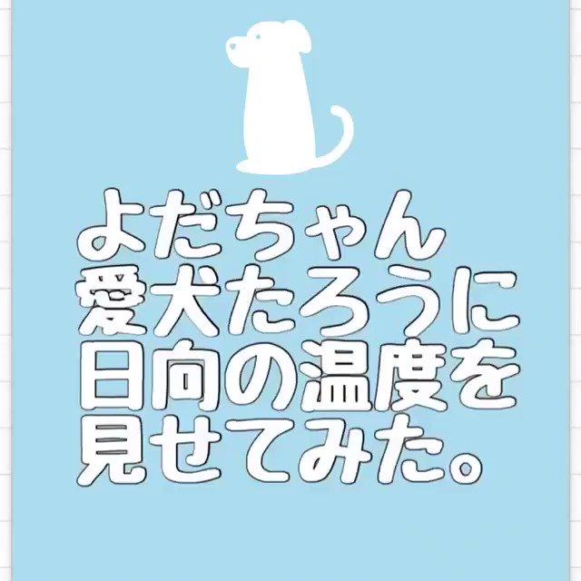 ニュースでも出ていた、与田さんが帰省された時、飼い犬タロウくんに写真集を見せた瞬間です。 タロウく...
