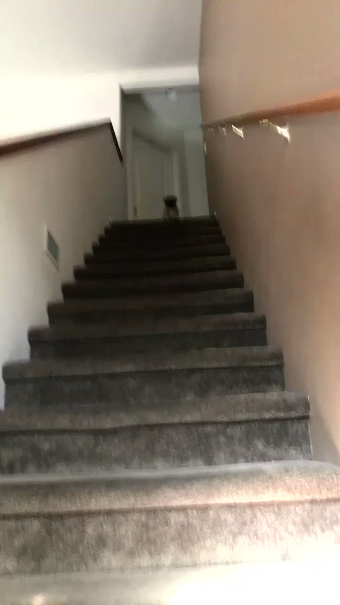 yeah so my dog was really excited to see me today ���� (wait for it) https://t.co/f3sEvaaIkf