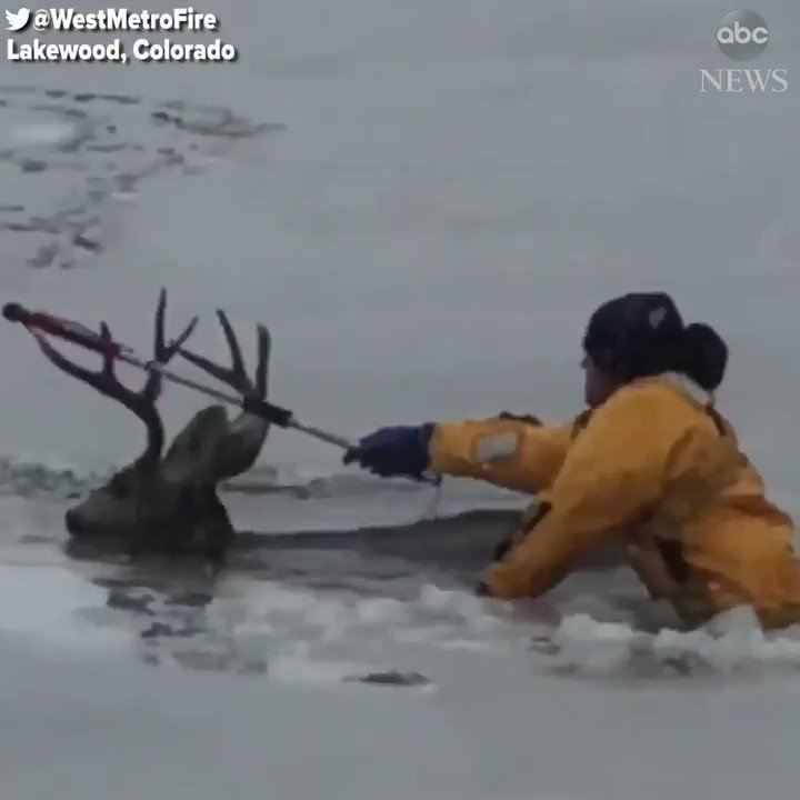 Colorado firefighters rescued a deer that fell through the ice and could not escape. https://t.co/FHJ2QxuFRq https://t.co/WZ3iNZjY4R