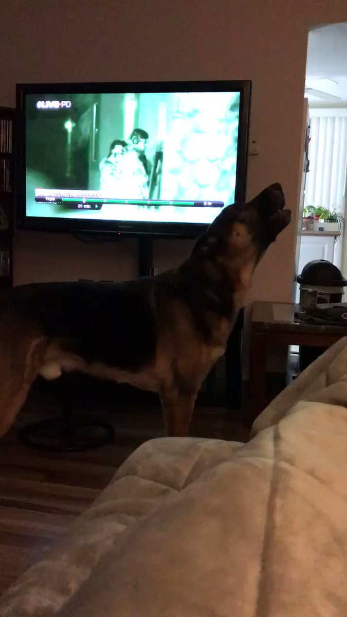 Watching Friday's episode of LivePD. Our dog Bear always gets into it. #LivePD https://t.co/WCFUvgiA3i