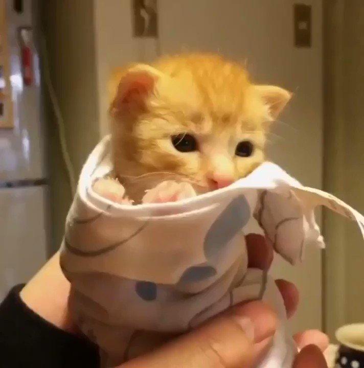 RT @LuvKittensDaily: From kitten to cat. https://t.co/LMYKodQlQS