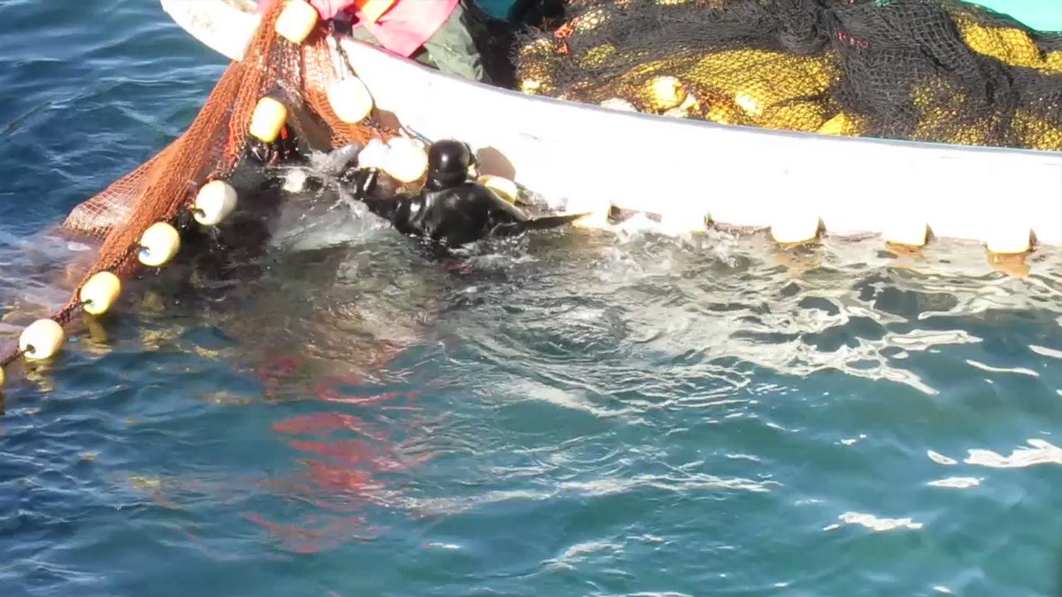 Want to stop dolphin abuse? #DontBuyATicket TAKE ACTION NOW ➟ https://t.co/mL0CwnnV1B #DolphinProject https://t.co/NXOi2oSXMb